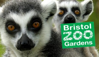 Girlguiding South West England Roadshow at Bristol Zoo